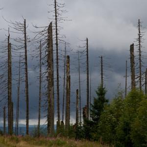 Bayerischer wald (Alberi morti a causa dellle piogge acide)