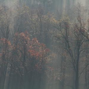Palù in autunno