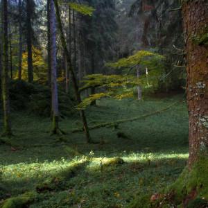 Raggio di sole in foresta