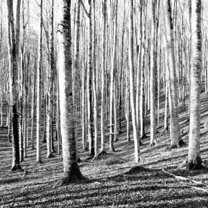 Bianco e nero in Foresta