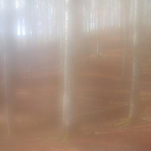 Cansiglio immerso nella nebbia