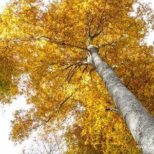 Cansiglio autunno 2015